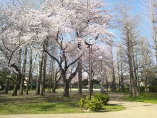 はけの森をめぐる旅(4/11~4/19)にKO-TOも参加しています!